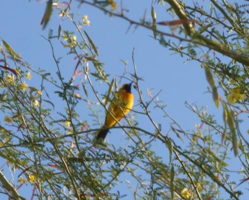 The bird I saw!