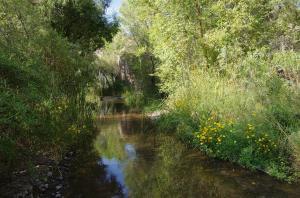 Bonita Creek